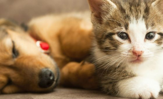 Puppy and kitten with collars and ID tags