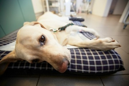 Pet Insurance Australia: Winter risks for pets