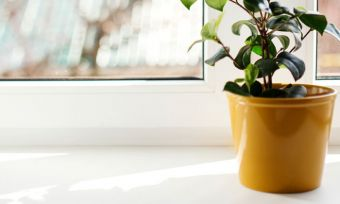 Pot Plant on Windowsill