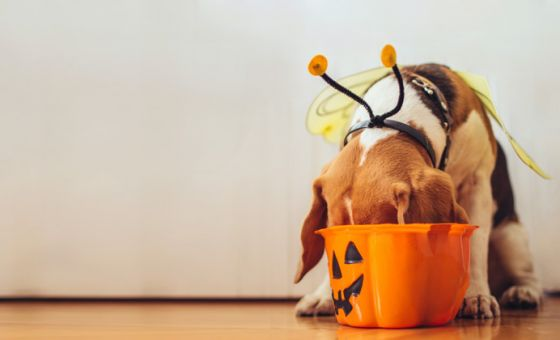 Looking after your pet during Halloween