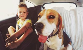 Don't leave your kid or your dog in the car