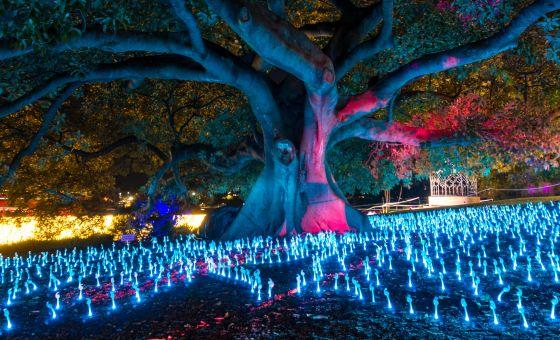 Festival Tree W/ Lights