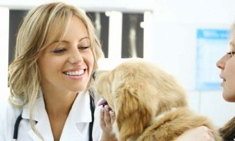 Dont-forget-about-pets-on-World-SmokeFree-Day