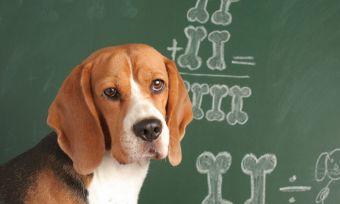 About pet insurance benefit limits