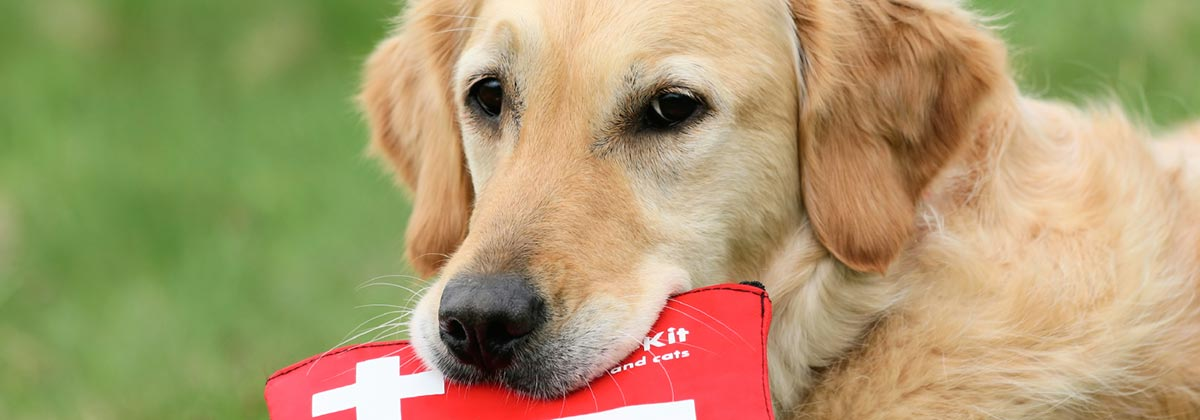 Low Interest Car Loans >> RSPCA's Free Guide to Pet First Aid: Care For Your Pets - Canstar