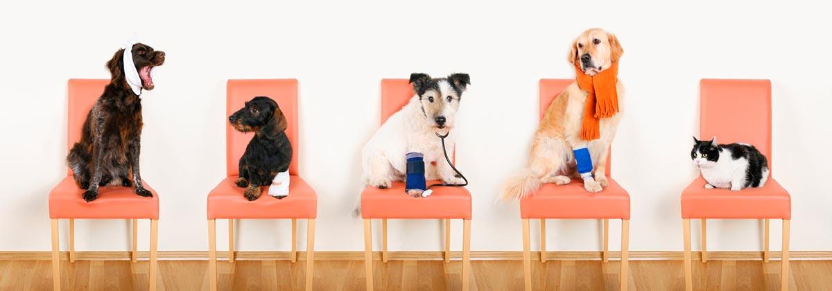Pet Ownership Statistics: Australian Ownership Rates ...
