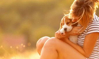 Beagle or Blue Heeler? Labrador or Lithuanian? Bow Wow Meow's Breed Selector tool helps you find which dog breed is the best fit as a pet for your household.