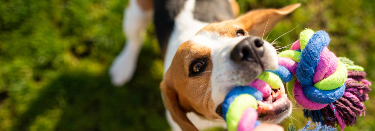 Pet Insurance Compare Over 150 Insurance Policies Canstar