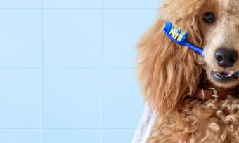 pet-insurance-with-dental-coverage