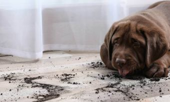 tips-to-puppy-proof-your-home