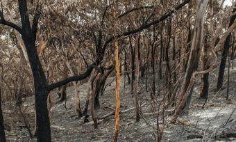 bushfire-insurance-claim
