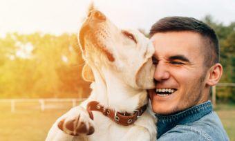 pet-insurance-customer-sat-award-2020