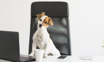 prepare-dog-cat-for-work-return